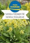 Svenska perenner_Primula veris_A4