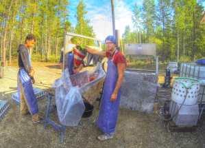 Ich habe ein paar Tage bei Whitehorse geWWOOFt. Der Farmer demonstriert gerade wie man einem Huhn die Arterie aufschneidet