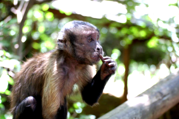 Monkey sanctuary South Africa