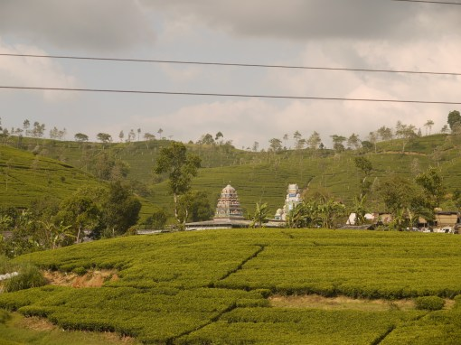 A South Indian style Kovil poking up in the middle of acres upon acres of tea plantations, Sri Lanka