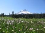 Mt. Hood from Elk Meadows