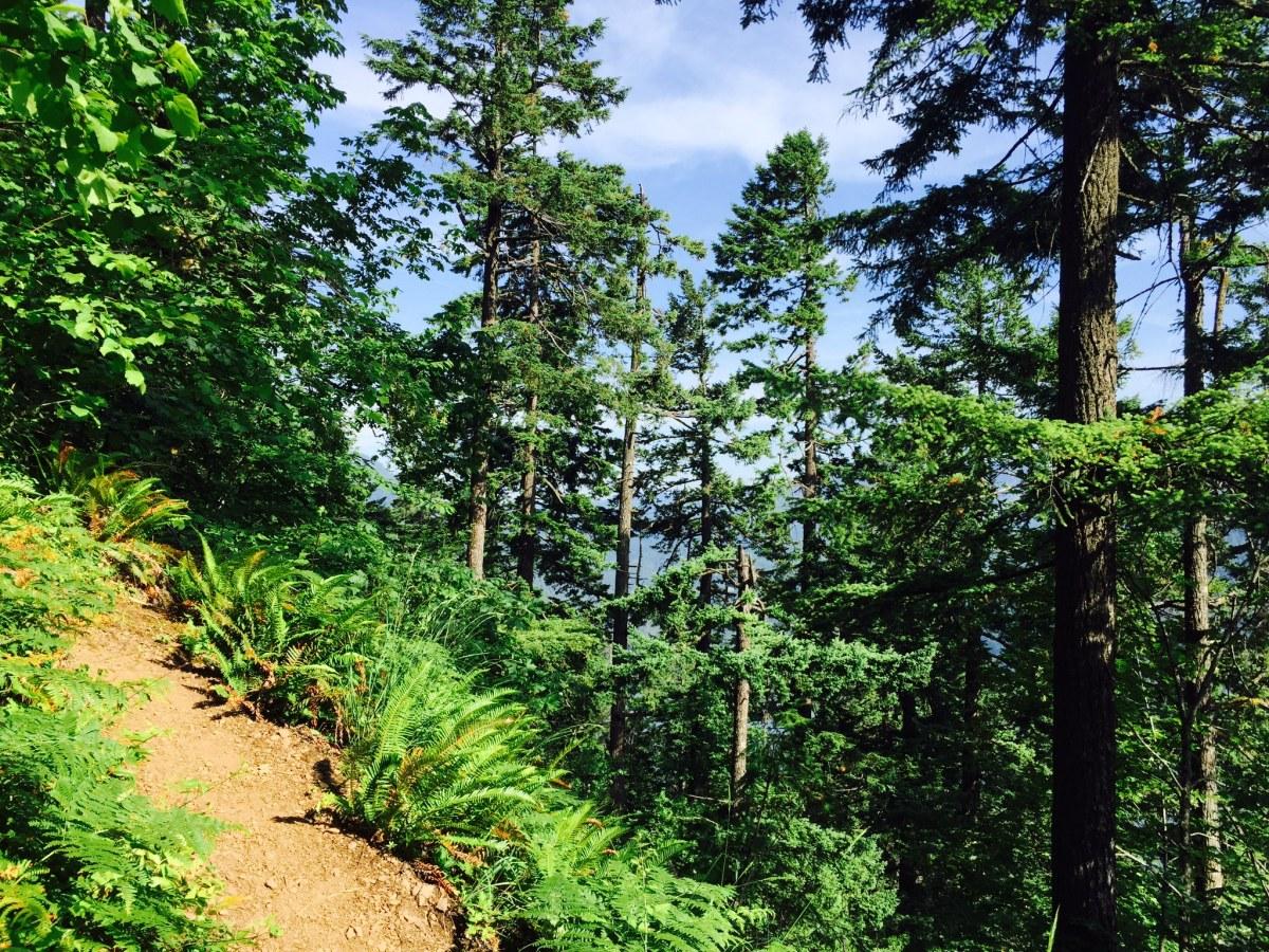 Mount Defiance - Starvation Loop Hike