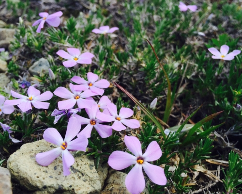 Editor's note: Please mention the wildflowers.