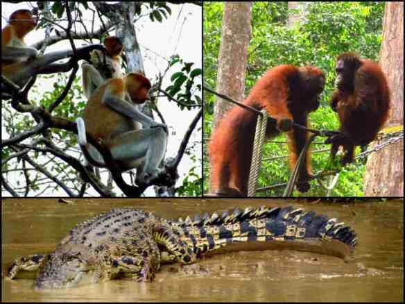 Animals of Borneo