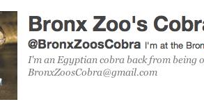 Bronx Zoo's Cobra Twitter