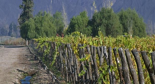 Argentina's wine regions are among the healthiest and most natural in the world.