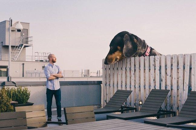 vivian-dachshund-giant-wiener-dog-photoshop-mitch-boyer-1