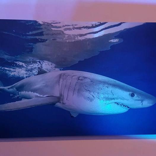 Oris-Tiburones-4