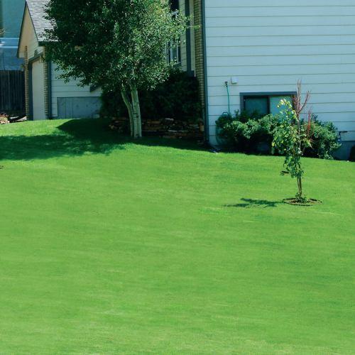 Medium Crop Of Canada Green Grass