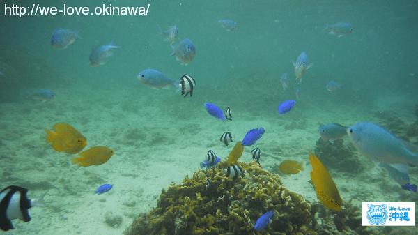 沖縄の海中