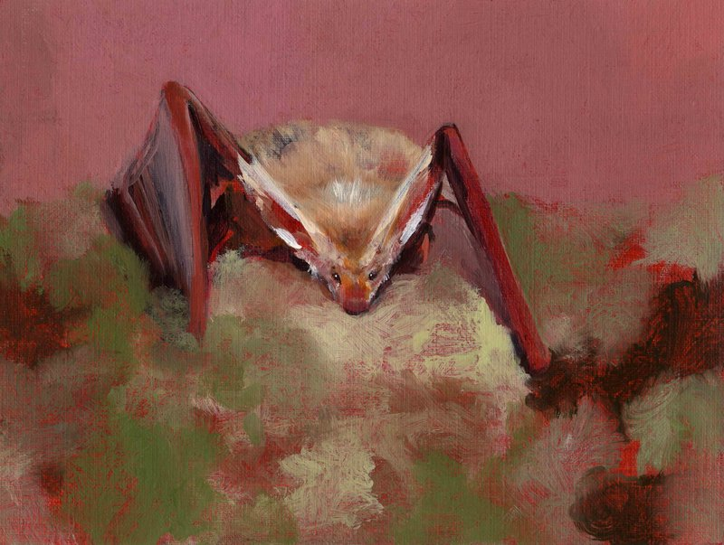 marvin-gayechetwynd-bat-opera-187-188-800x800
