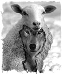 zoor, zur, Wolves in sheep's clothing