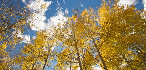 trees-main