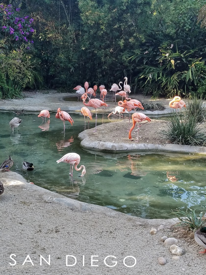 best zoo in the world san diego zoo