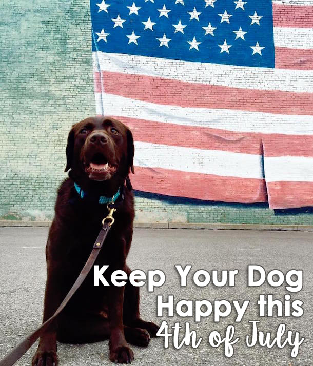 Keep Your Dog Happy This Fourth of July