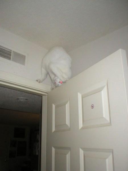 ninja-cat-hiding-funny-49__605