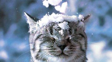 10 Cats that Hate Winter