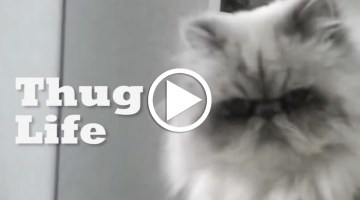 OMG – This Cat Chose the Thug Life!