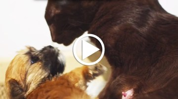 LOVE: Cat Adopts Orphaned Puppy