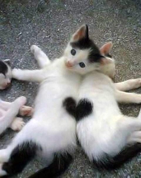 kittens_heart1
