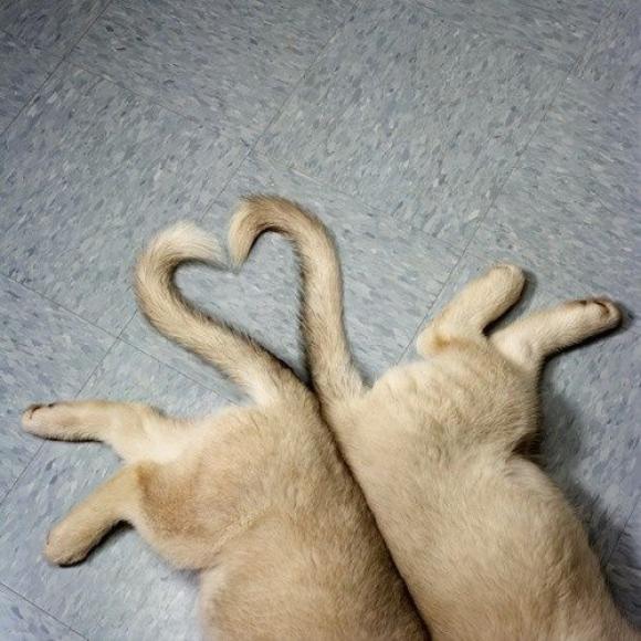 l-Love-cats