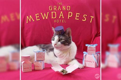 grand mewdapest hotel cat