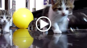 Kittens Confused by Soap Bubbles