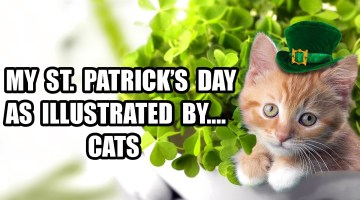 My St. Patricks's Day as Illustrated by Cats