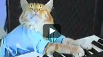 #ThrowBackThursday: The Original Keyboard Cat Video