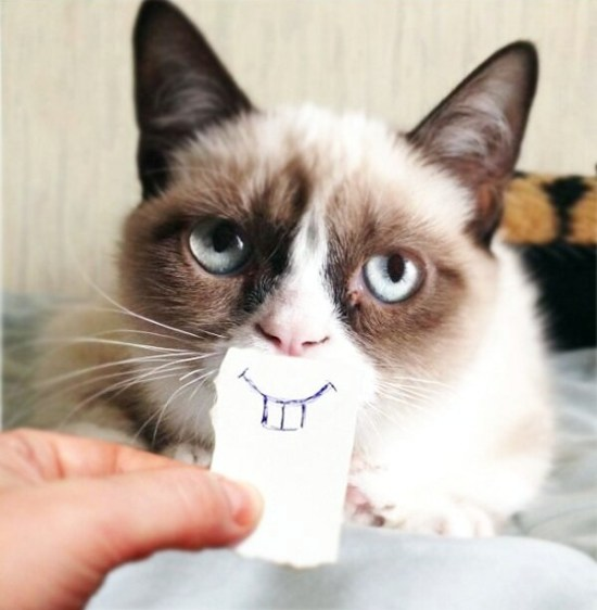 best-funniest-grumpy-cat-22