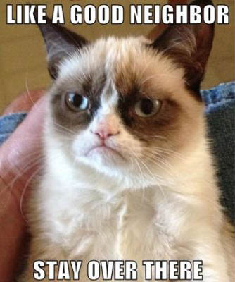 best-funniest-grumpy-cat-7