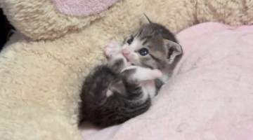 This tiny kitten grooming itself is all sorts of cute