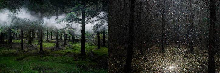 イギリスの中の照らされた森林の神秘的なの写真 by Ellie Davies