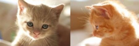 Foursquare lanza campaña que busca asegurar el bienestar de los gatitos