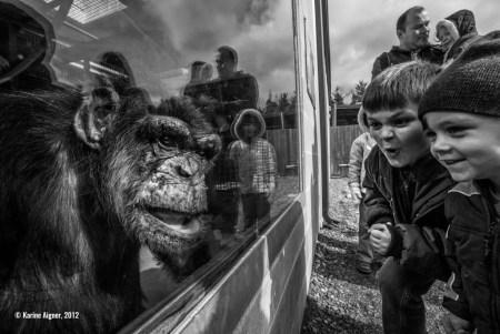 Anuncian los ganadores del primer concurso de fotografía de conservación
