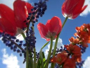 Red Flowers & Sky