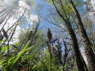 Woodland Scenery