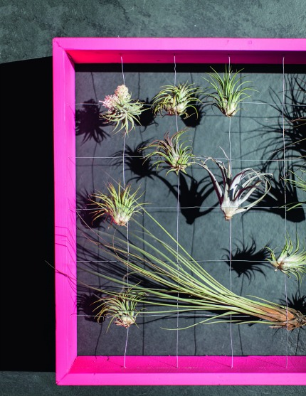 The House Gardener by Isabelle Palmer Neon Frame with Air Plants