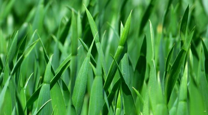 https://pixabay.com/en/grass-blades-of-grass-nature-meadow-383284/