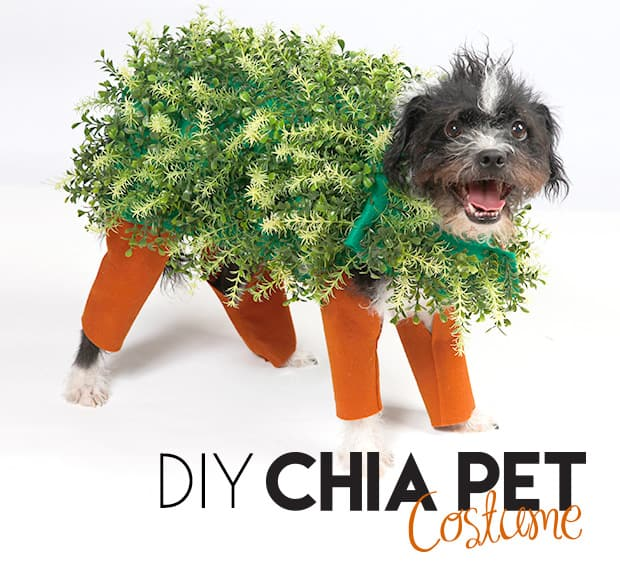 Save chia pet dog costume to get e-mail alerts and updates on your eBay Feed. + Items in search results. Bootique Dog Pet Costume Cowboy Hat Star XS X-Small New