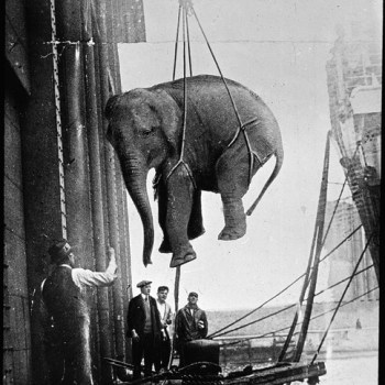 Hoisting the Elephant
