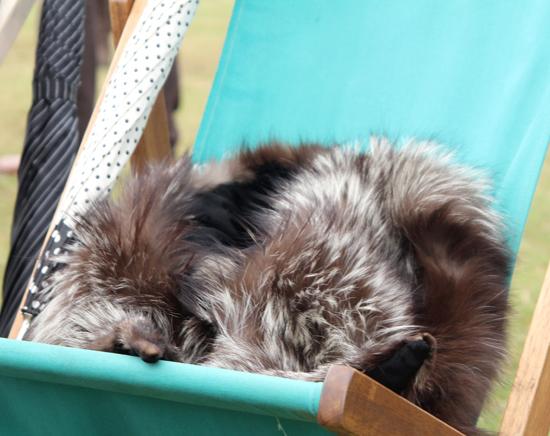 Vintage fur