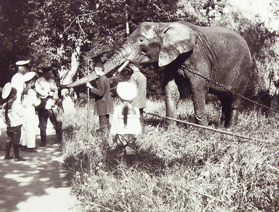 Nicholas II feeds the elephant.