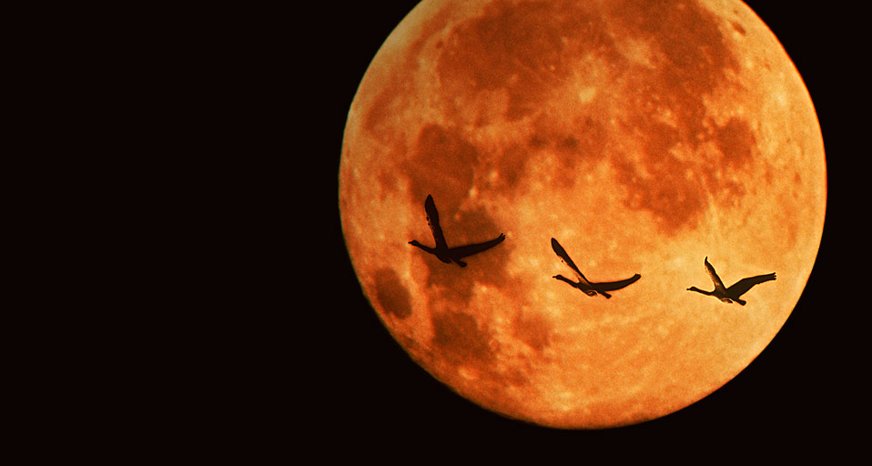 We Were There The Supermoon Eclipse Part 2 Weird Sister