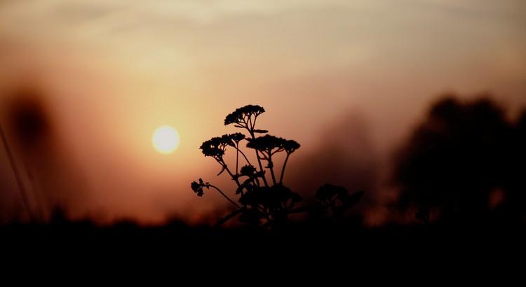 Eine Generation, die den Krieg hasst, wird keinen Frieden bringen. Eine Generation, die den Frieden liebt, wird Frieden bringen. - Gerda Lier