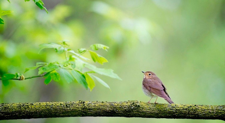 Ein Vogel hat niemals Angst davor, dass der Ast unter ihm brechen könnte. Nicht weil er dem Ast vertraut, sondern seinen eigenen Flügeln.