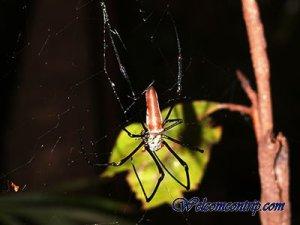 spiderlitchfield
