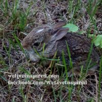 Cozy Cottage Weekends-Wild Mama Rabbit With Her Baby Bunny