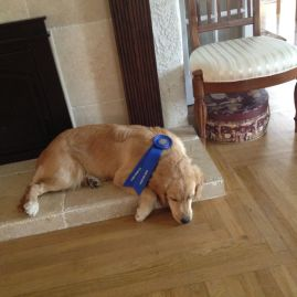This is Portia McCahill, CGC after she passed the CGC test. She slept the rest of the day!!