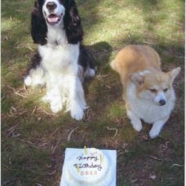 Oreo's birthday!